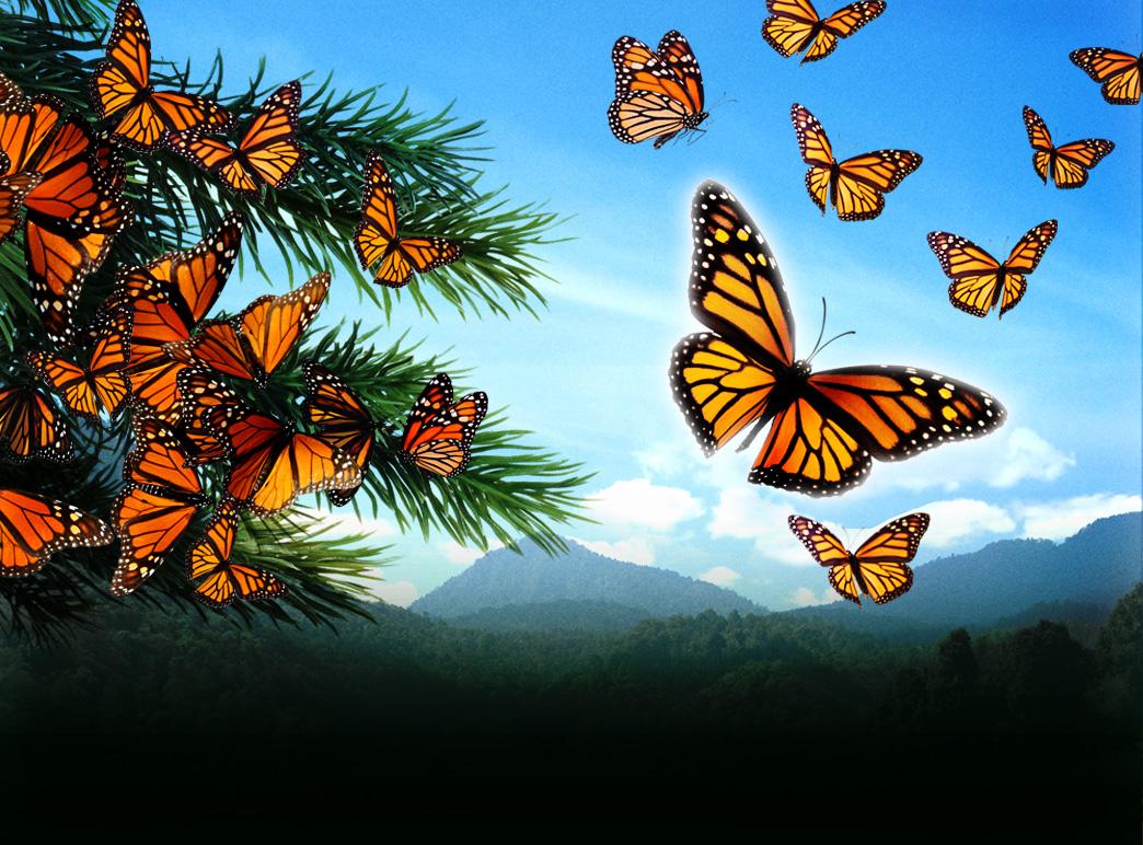 Monarch butterflies flying away - photo#35