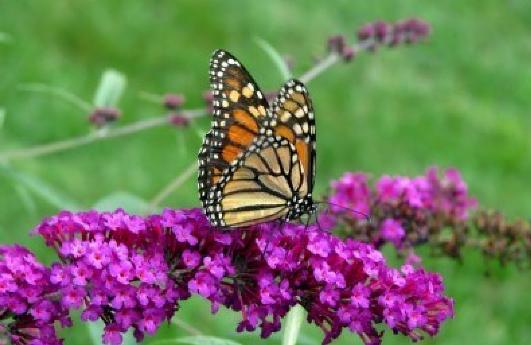 How To Build A Butterfly Garden Returns