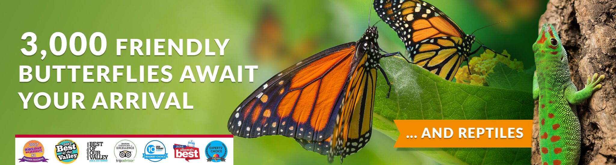Butterfly Wonderland A Rainforest Experience Tiket Park Insect Kingdom General Admission Combination Pass Annual