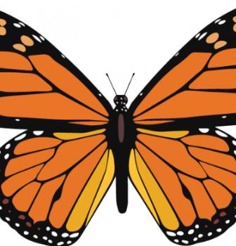 Monarch Walk Series