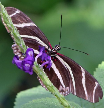 Spend MLK Day with Butterfly Wonderland!