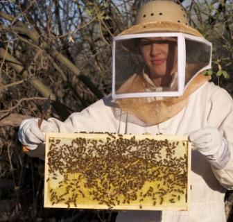 Beekeeping Workshop coming soon