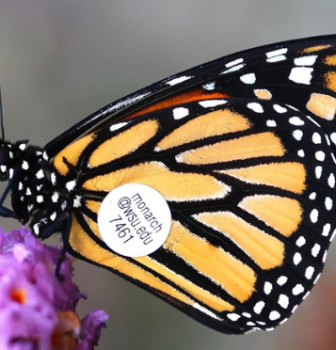 Take a Field Trip with Butterfly Wonderland!