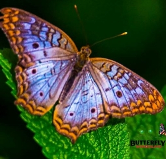 Butterfly Wonderland Announces New Educational Programs