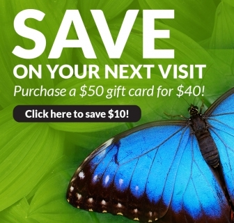 Save into the New Year at Butterfly Wonderland