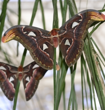 Register Now for Butterfly Wonderland's Moths of Arizona Workshop!