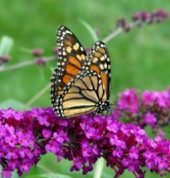 How to Build a Butterfly Garden Returns