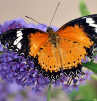 Wake Up with Our Butterflies This Weekend!