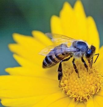 Bee Exhibit Temporarily Closed