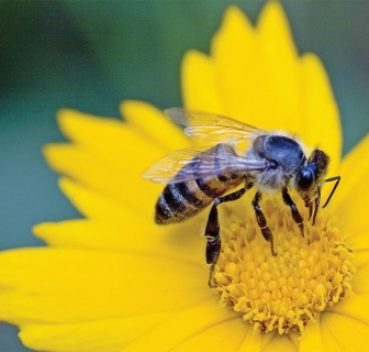 Buzz Buzz: A blog all about bees!